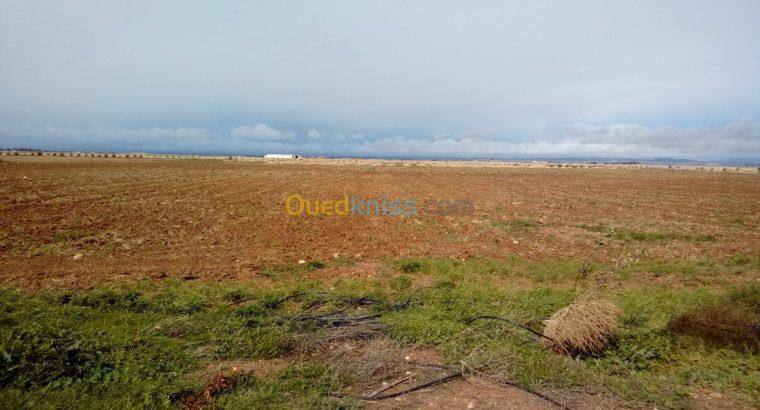 Vente Terrain Agricole Tiaret Rechaiga