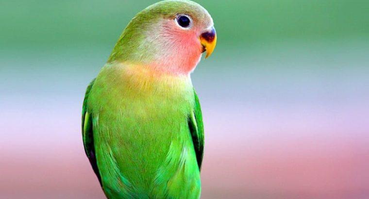 Beautiful Parrot